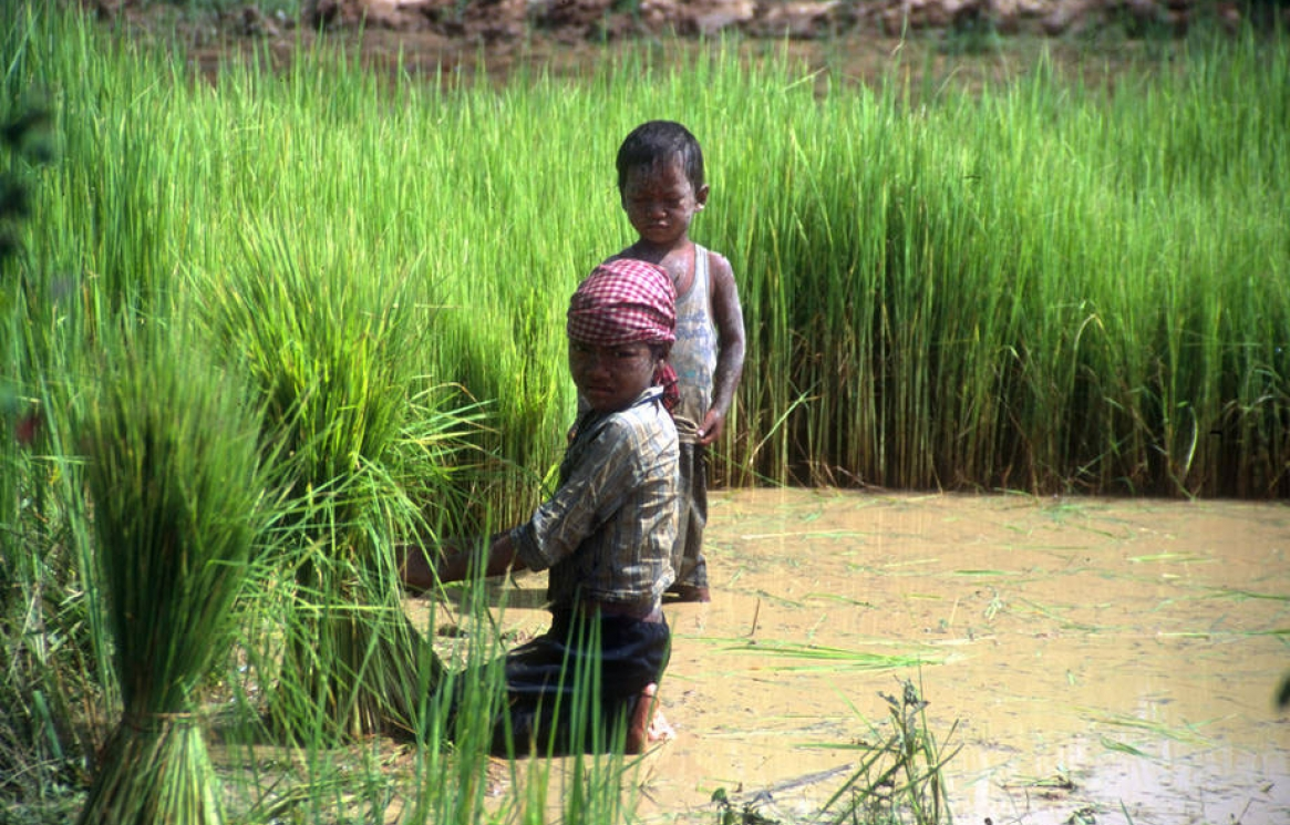 06-15-fao-child-labour.jpg